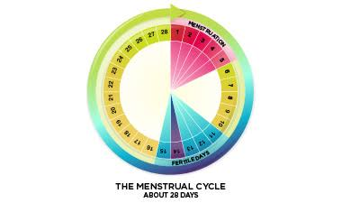 """Image result for menstruation cycle"""""""